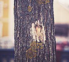 Tree love by AlexandraSophie