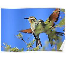 Bee-eater - African Wild Birds - Colors of Flight Poster
