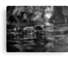 Crocodile 1 Metal Print