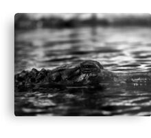 Crocodile 2 Metal Print