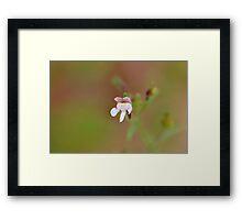 Dwarf Snapdragon Framed Print