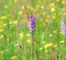 English meadow by Emma M Birdsey