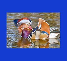 Mandarin Duck At Mangerton Mill, Dorset by lynn carter