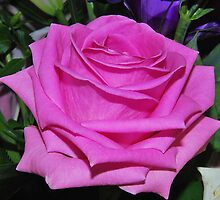 Pink Rose by relayer51