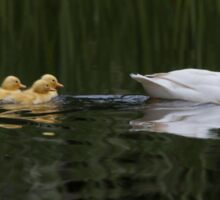 Mother duck and her chicks Sticker