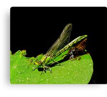 beauty emerges from the beast- green dragonfly Canvas Print