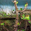 Love Birds by Stephen Frost
