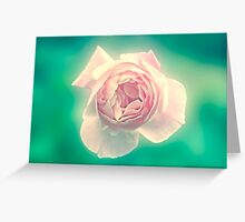 Digitally manipulated painting of a Pink English rose as seen from above  Greeting Card