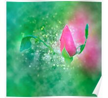 Digitally manipulated exploding red Rose bud Poster
