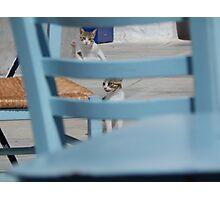 "Serifian Cats ""Stou Stratou"" Photographic Print"