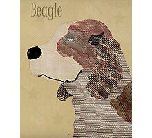the beagle dog  Photographic Print