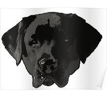 Black Lab - Fenway Poster
