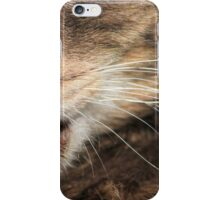 Close-up of tabby cat licking fur iPhone Case/Skin