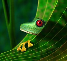 Endangered Rainforest Tree Frog by Paul Fleet