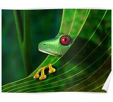 Endangered Rainforest Tree Frog Poster
