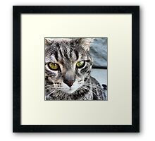 Intense Cat Stare!! Pillows Totes and Prints Framed Print