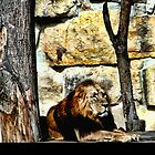 Male Lion in the Sun by brijo