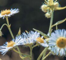 Daisy Flowers Sticker