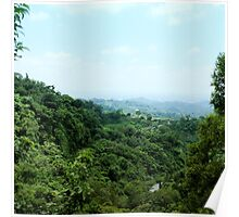 """#886.002 """"Tranquil Forest/ Taichung"""" Poster"""
