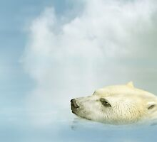 Polar Bear by Paul Fleet