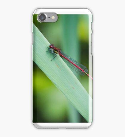 Damselfy iPhone Case/Skin