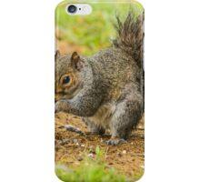 Grey Squirrel (Sciuridae) iPhone Case/Skin