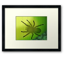 Rainforest spider hiding behind a leaf Framed Print