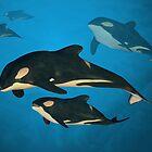 Orca Family by Paul Fleet