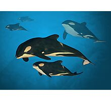 Orca Family Photographic Print