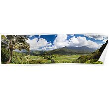 Hanalei Valley's taro fields in Kauai, Hawaii Poster