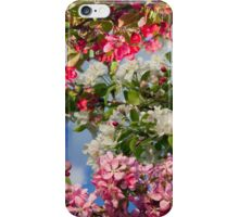 Blossoming apple trees iPhone Case/Skin