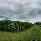 Amish Country Cornfield by James Watkins