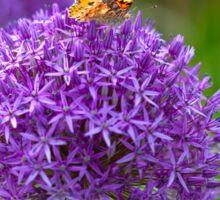 Butterfly on the Allium flower Sticker
