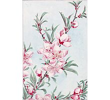 Peach Blossoms, Petals, Leaves - Pink Green Photographic Print