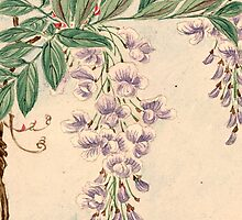 Wisteria Flowers, Petals, Leaves - Purple Green by sitnica