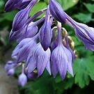 Purple in July by Jing3011