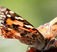 Painted Lady Butterfly II Sticker