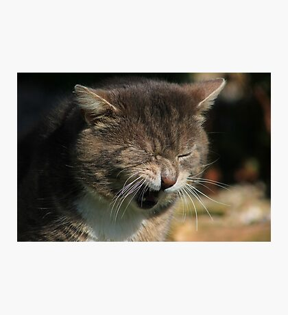 Grumpy cat Photographic Print