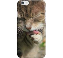 Tabby cat licking paw in garden iPhone Case/Skin