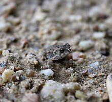 Little toad by Kelly Morris