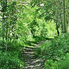 Mountain Trail by marilyn diaz