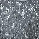 Tall Grasses by Rebecca Bryson