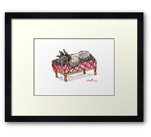 Scottie on a couch Framed Print