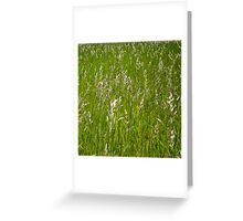 Blackeyed Susan in the Amber Grain Greeting Card