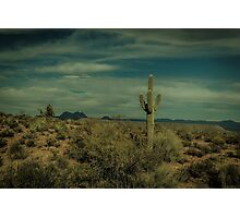 The Lone Cactus Dragan Light Photographic Print