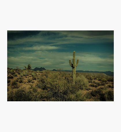 The Lone Cactus Dragan Light Photographic Print