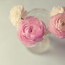 Pastel Ranunculus  by Nicola  Pearson