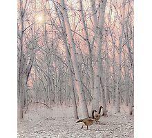 4250 Photographic Print