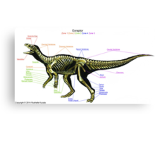 Eoraptor Skeleton Study Canvas Print