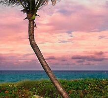 Beautiful palm on a tropic beach. by DDMITR